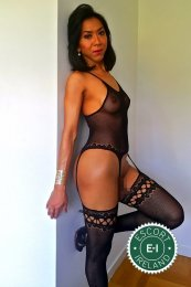 Meet the beautiful TS Shemale Rammer in Limerick City  with just one phone call